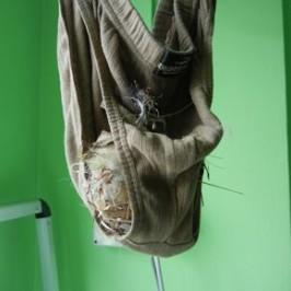 Sunbird nesting in my underwear…