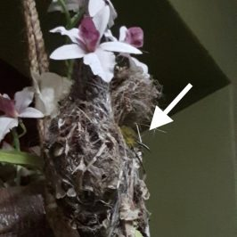 What happened to the sunbird's chick?