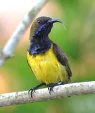Gardening for birds: 4. Plants for nectar-feeding birds