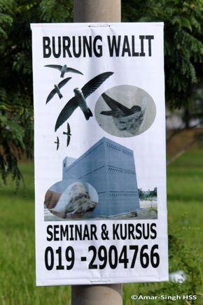 Swiftlet breeding in Malaysia