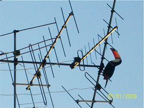 Toucan sighting