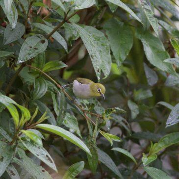 Birds feeding in the rain…