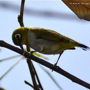 Miscellaneous bird vocalisation 2