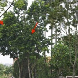 Why do birds roost in some trees but not others?