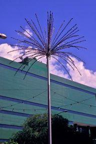 Plant-Bird relationship: 16. Addendum – Plasticaceae