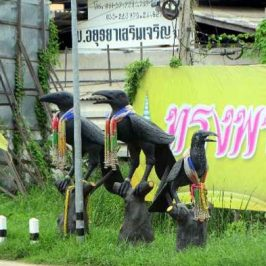 Thais and the Large-billed Crow