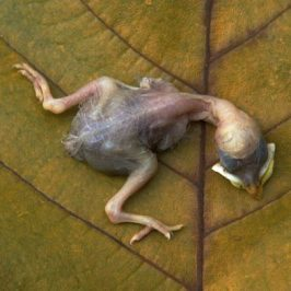 A dead chick in the garden…