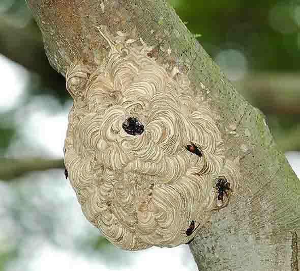 hornets' nest [JWee]
