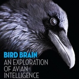 <strong>Book Review:</strong> Bird Brain: An Exploration of Avian Intelligence by Nathan Emery