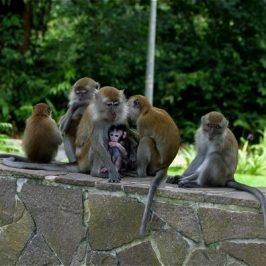 Save MacRitchie Forest: 3. Mammals