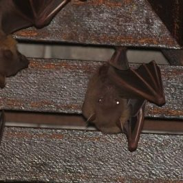 Bats in my porch: 16. An uneventful evening