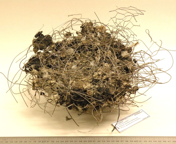 Metal wire pigeon's nest - courtesy of Natural History Museum Rotterdam