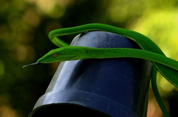 Snakes in my garden…