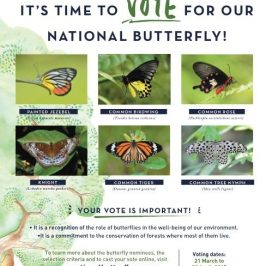 NATIONAL BUTTERFLY  Campaign: It's time to VOTE for our National Butterfly