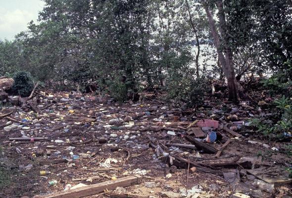 Sungei Buloh mangrove - picture taken in August 1991