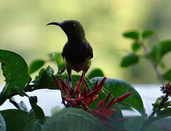 sunbird Nest [HenriettaJansen] 10