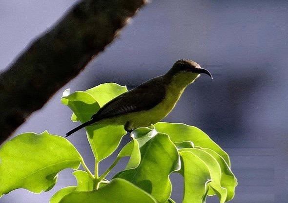 sunbird Nest [HenriettaJansen] 11