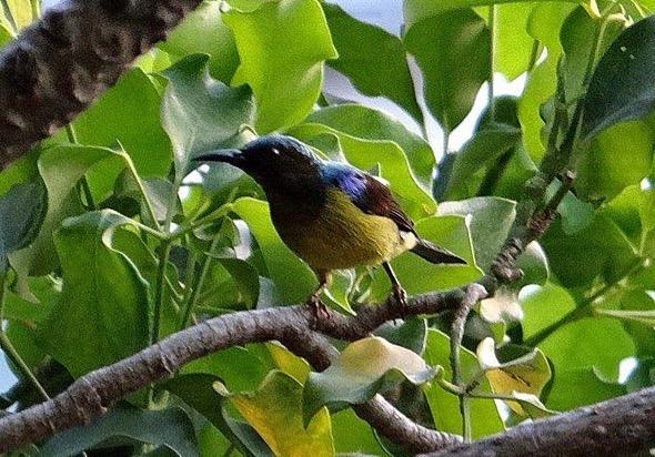 sunbird Nest [HenriettaJansen] 12
