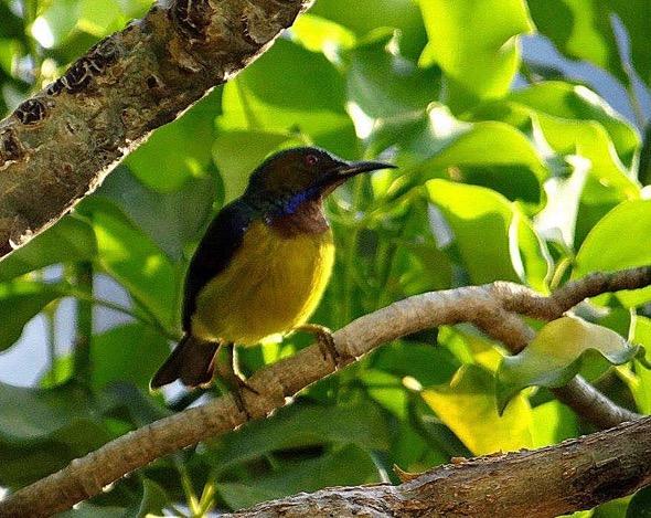 sunbird Nest [HenriettaJansen] 13
