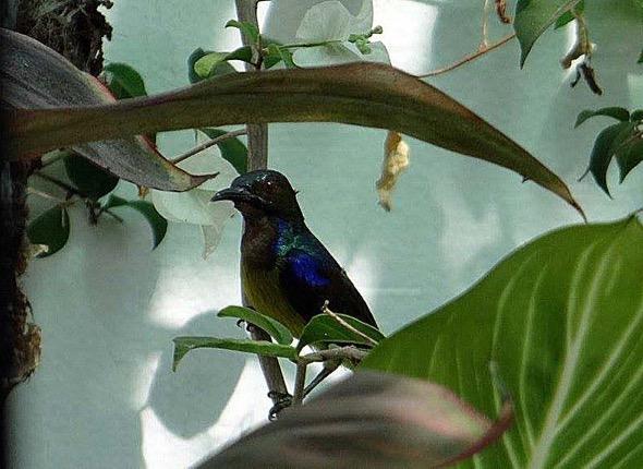 sunbird Nest [HenriettaJansen] 14