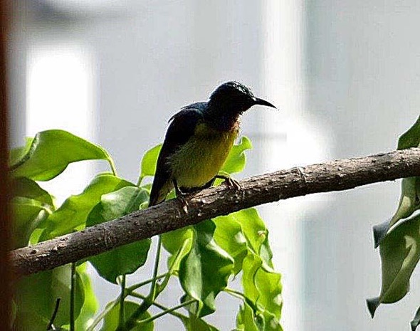 sunbird Nest [HenriettaJansen] 17