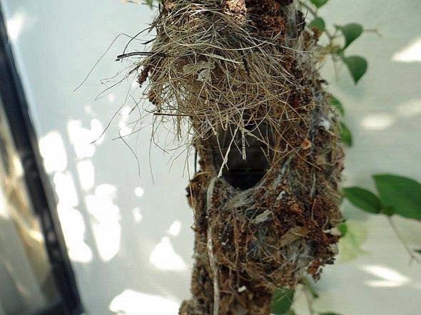 sunbird Nest [HenriettaJansen] 2