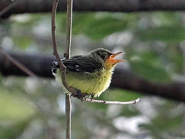 sunbird Nest [HenriettaJansen] 20