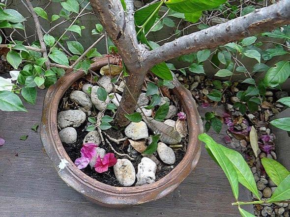 sunbird Nest [HenriettaJansen] 28