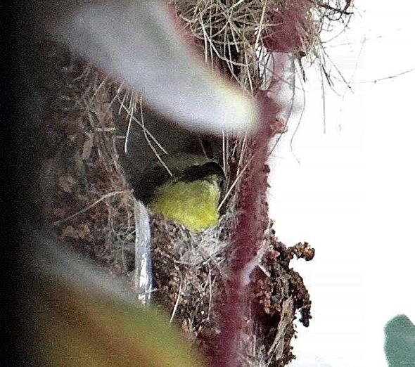 sunbird Nest [HenriettaJansen] 3
