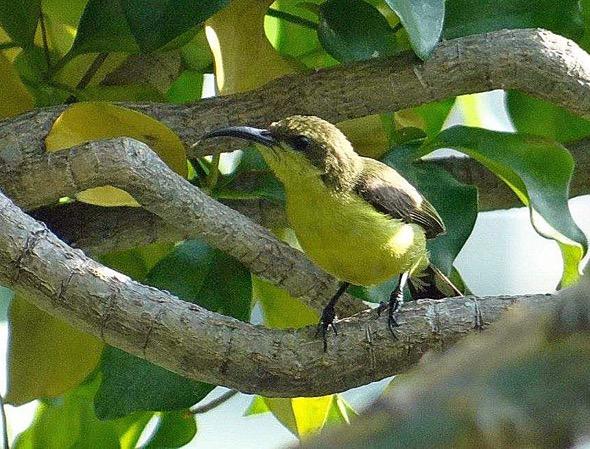 sunbird Nest [HenriettaJansen] 5