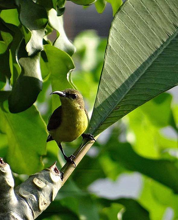 sunbird Nest [HenriettaJansen] 6