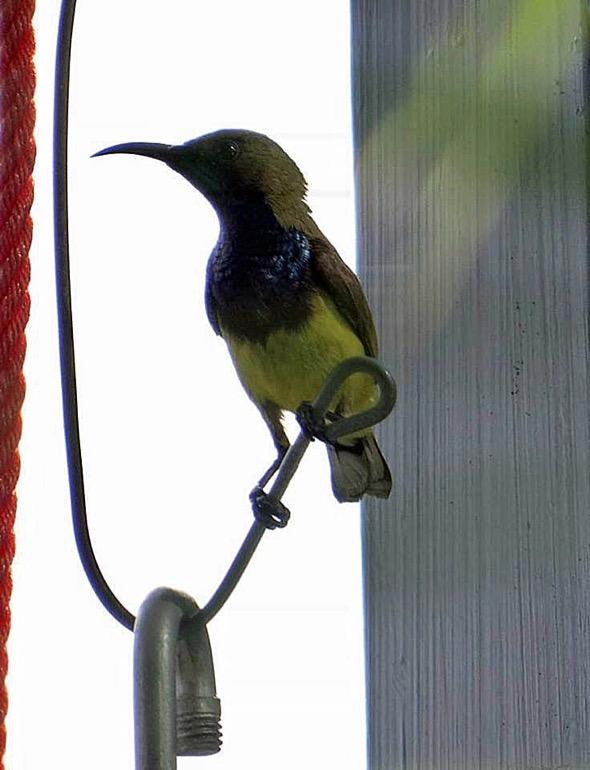 sunbird Nest [HenriettaJansen] 7