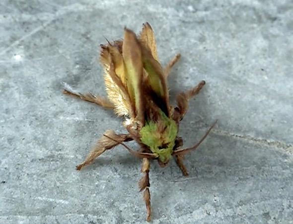 3 BSNettleGrub-moth [wyc]
